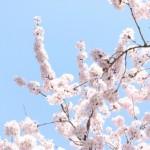Spring Thanks