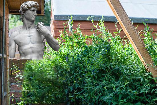 David in the garden-2