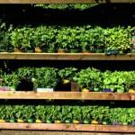 Project Garden: Flower Pots