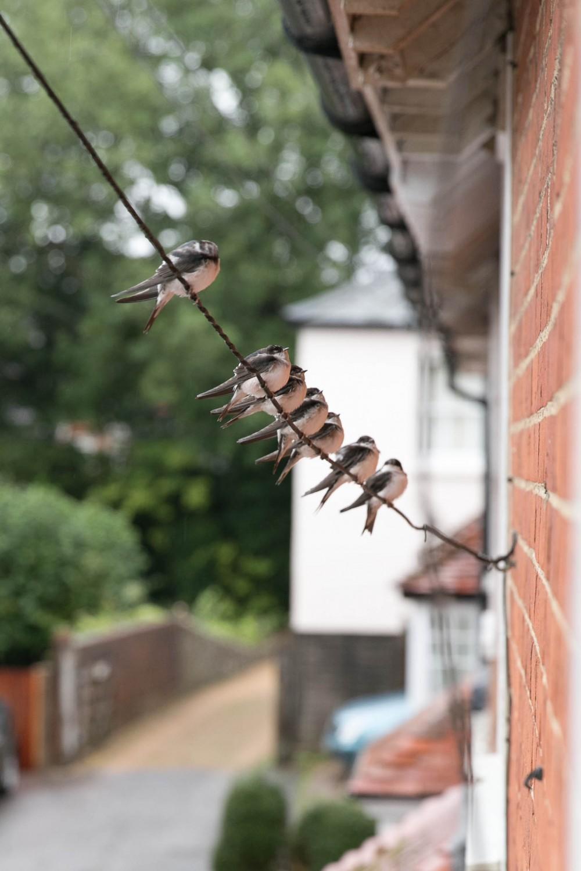 Migrating Housemartins