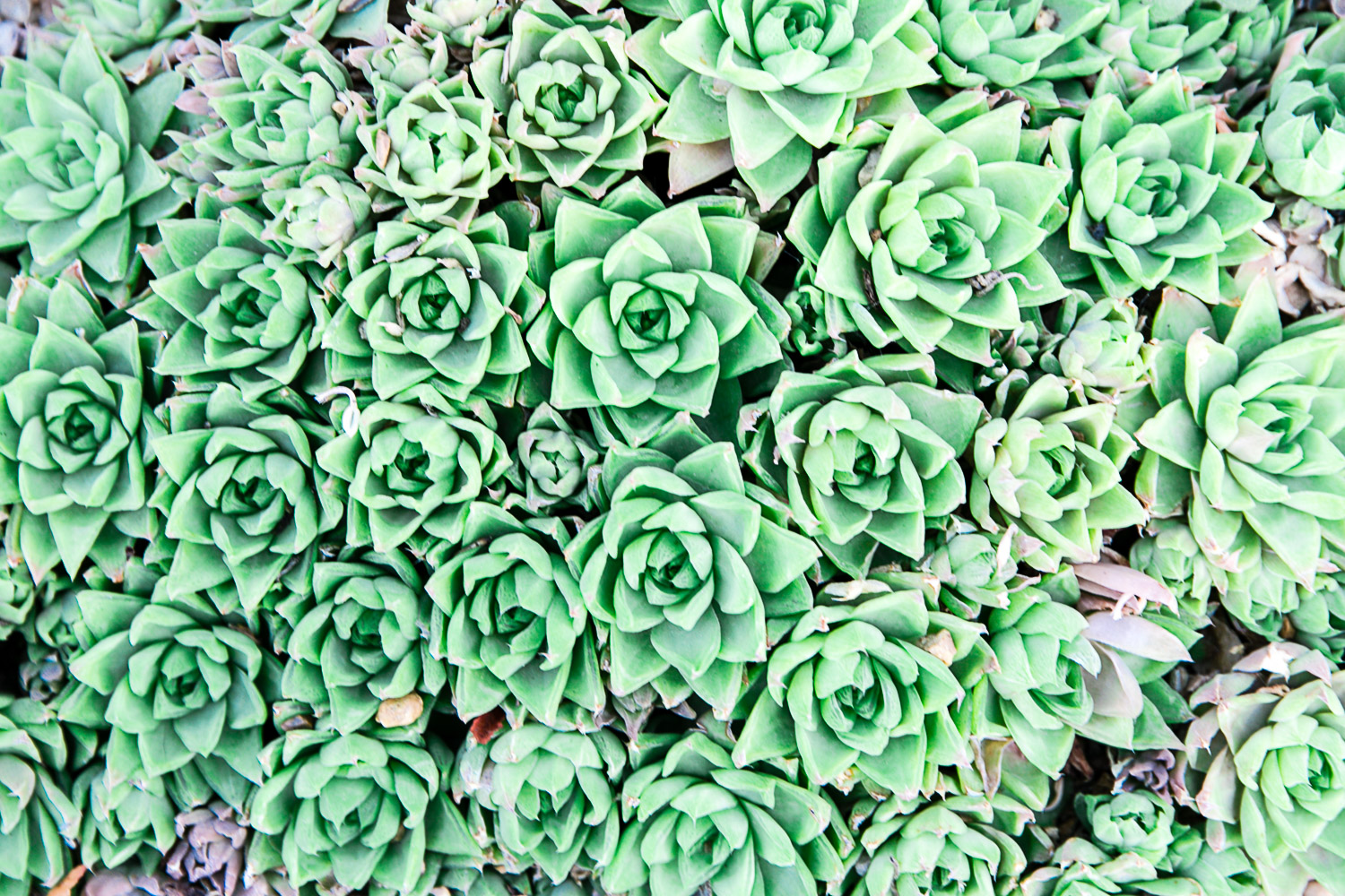 Kew Gardens Succulents by Kat Molesworth