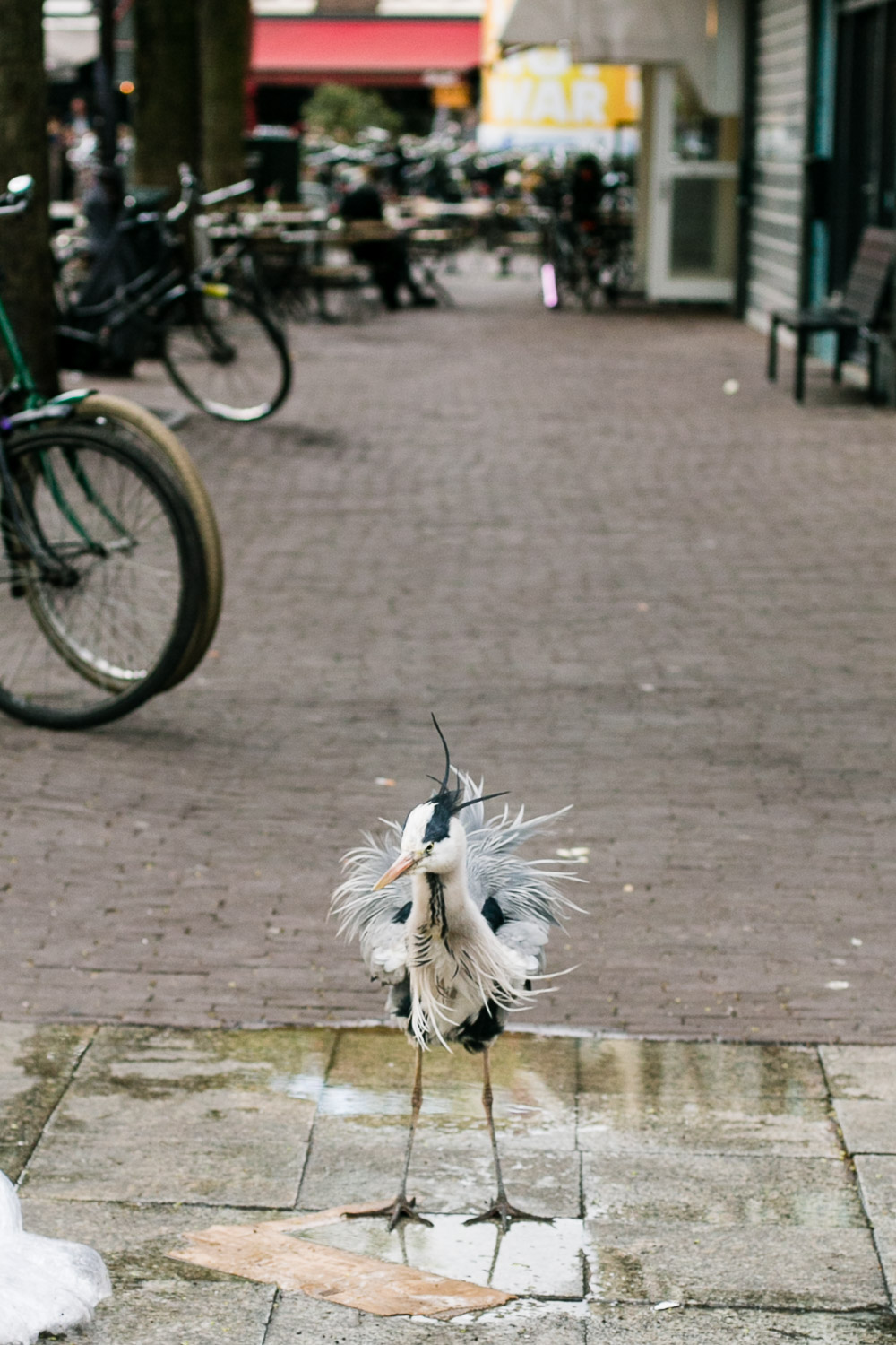 Street Photography Amsterdam © Kat Molesworth Photography